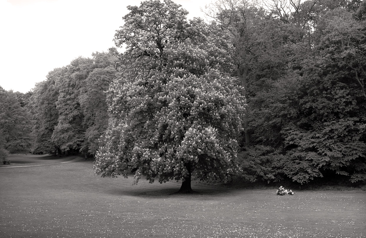 Frau mit Kind auf Parkwiese neben Baum